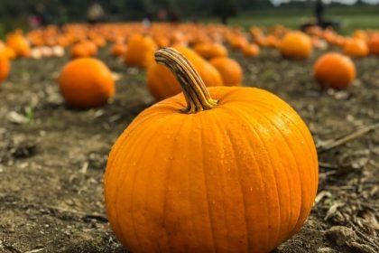 Pumpkin Spice Season is Here, Pumpkin Spice Season is Here!
